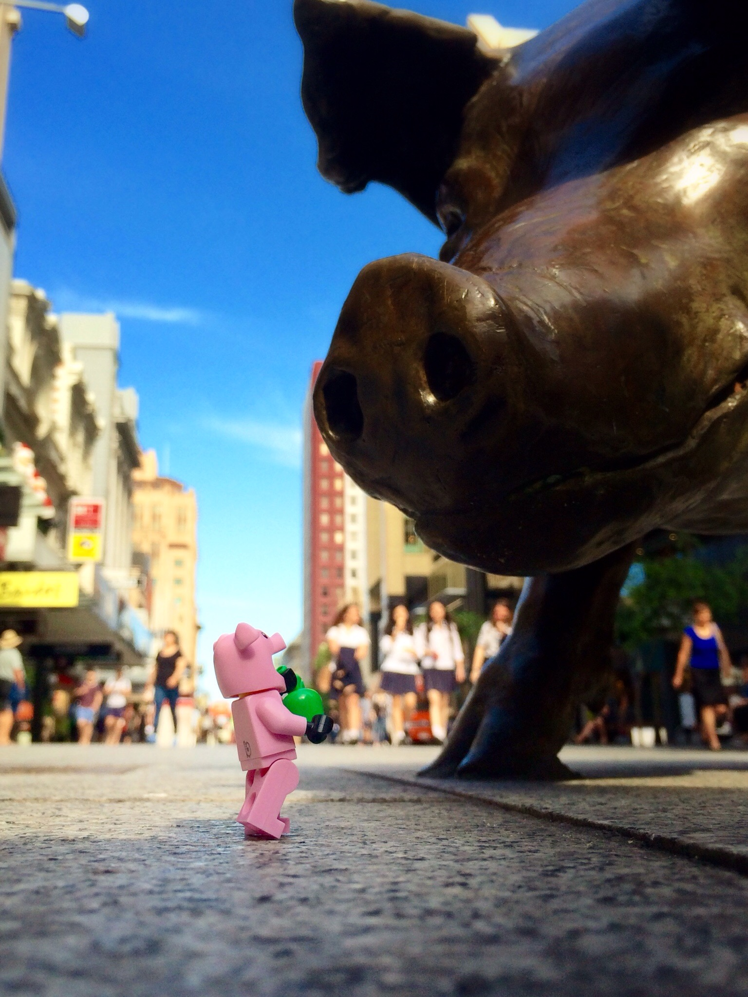 Pigs in Rundle Mall